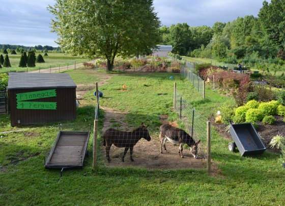 Original plans didn't include two minature donkeys, but today they are very much a part of what we do.