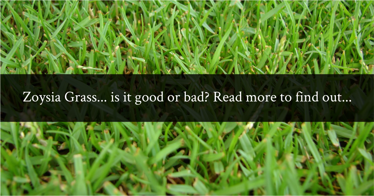 Zoysia Grass... is it good or bad? Read more to find out...