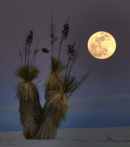 Plant By The Moon