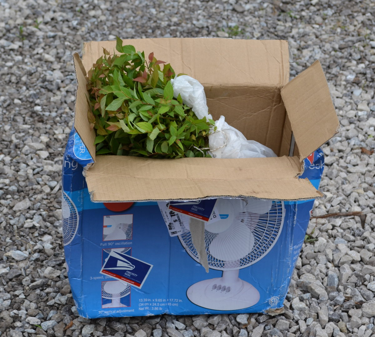 How to Ship Plants by U S  Mail, UPS or Fed Ex  - Mike's