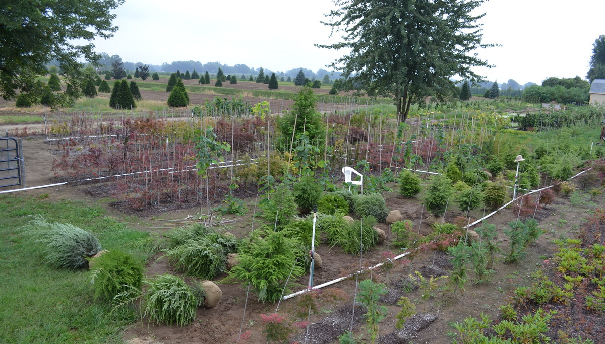 My little nursery is sandwiched between two dirt farm roads with nurseries on either side of me, behind my property and at least 83 other nurseries in a 15 mile radius around my property.  And you're worried about competition?