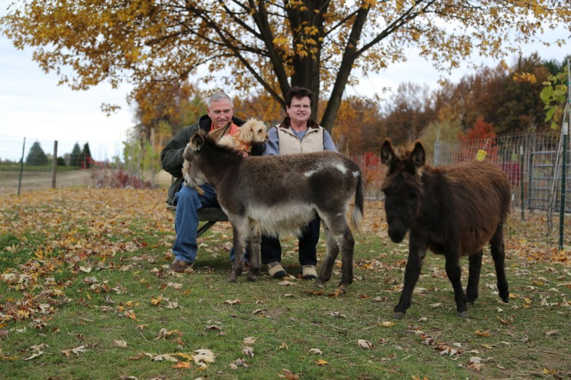 Mike & Pam McGroarty with the donkeys and their little yellow dog.