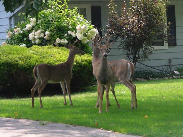 Plants Are The Most Deer Resistant