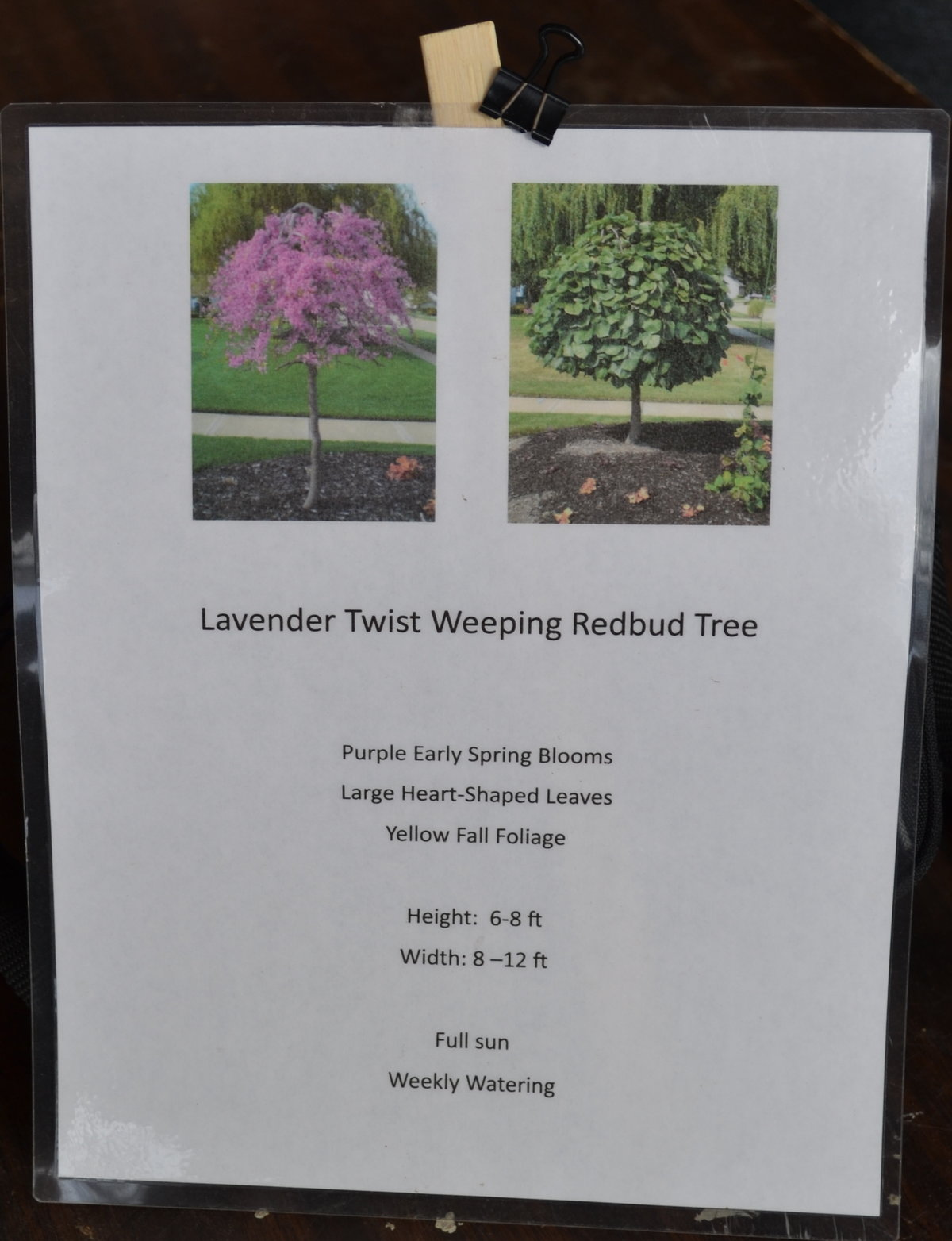 Point of sale sign for the Lavender Twist Redbud Tree.