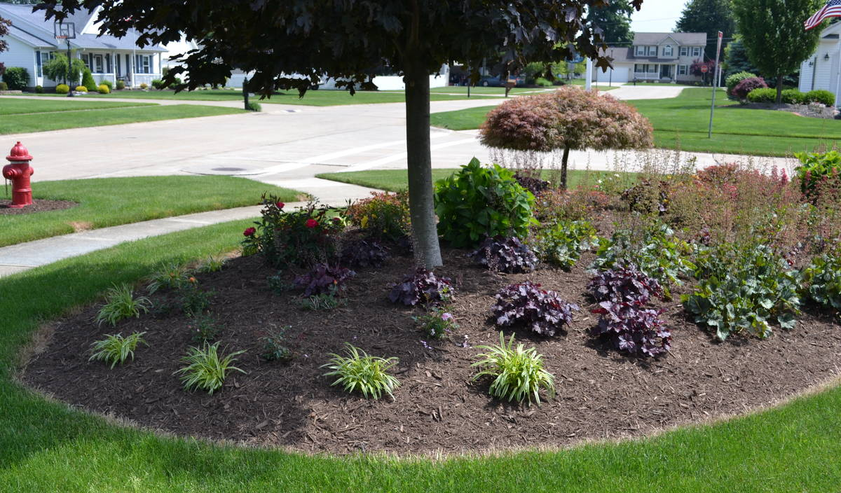 a corner landscape planting featuring a royal red maple tree - Garden Ideas Under Trees