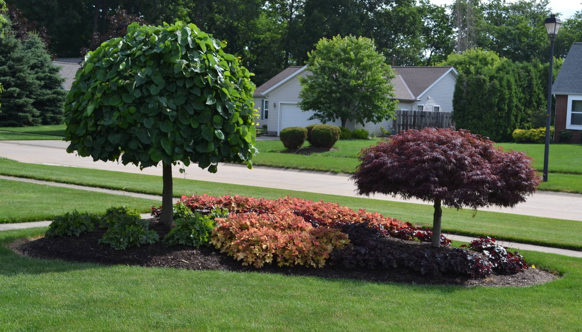 Landscaping Around A Group Of Trees : Landscaping ideas for an island planting in the front yard