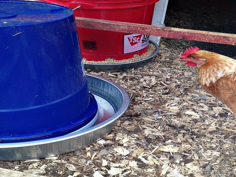 completed chicken waterer