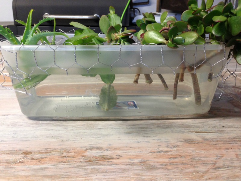 How to create a hydroponic garden - Hydroponic container gardening ...