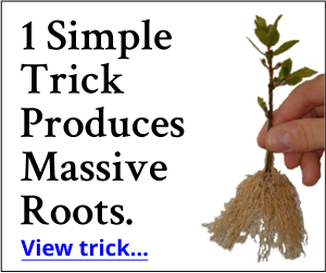 1 Simple Trick Produces Massive Roots