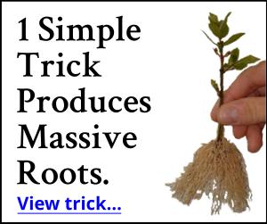 1 Simple Trick Produces Massive Roots