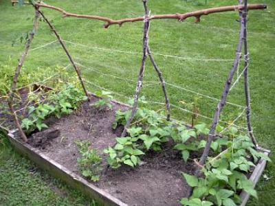 7 Green Bean Trellis Ideas