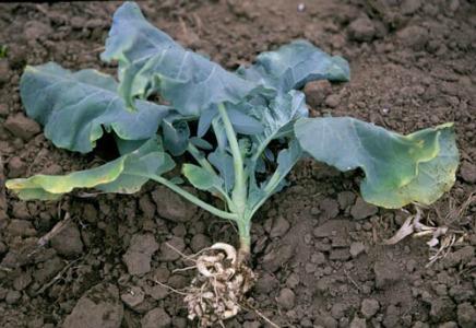 soil7