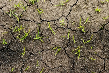 10 Indications Your Soil is Bad and How to Fix It