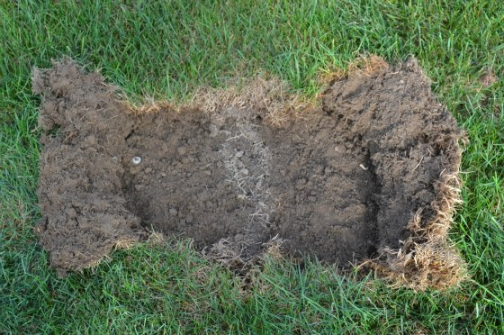 Skunks digging, moles tunneling, why are they digging up ...
