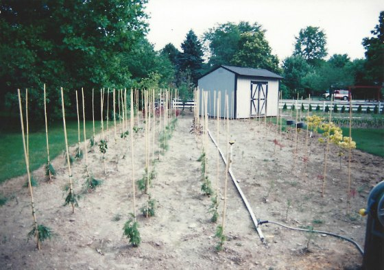 Mike McGroarty's first backyard nursery.