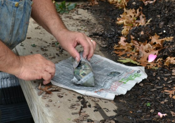 Tuck the ends of the bundle and wrap again in more wet newspaper.