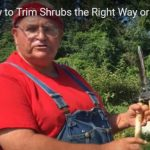 Mike McGroarty, teaching how to trim shrubs.